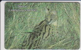 #07 - NAMIBIA-01 - SERVAL - Aruba