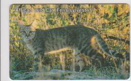 #07 - NAMIBIA-03 - AFRICAN WILD CAT - Aruba