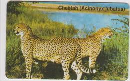 #07 - NAMIBIA-05 - CHEETAH - Aruba