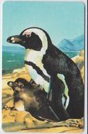 #07 - NAMIBIA-06 - PENGUIN N$50 - Aruba