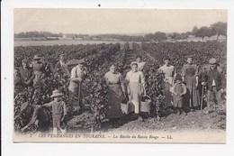 CPA 37 Les Vendanges En Touraine La Récolte Du Raisin Rouge - Centre-Val De Loire
