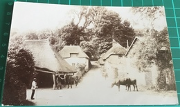 Old Real B&W Photo Postcard ~ (unknown) Devon - England