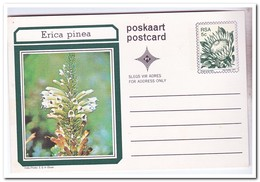 Zuid Afrika 1977, Postcard, Plants - Zuid-Afrika (1961-...)