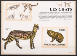 Comores - 2009 - Bloc BF N°Yv. 155 - Chats - Non Dentelé / Imperf. - Neuf Luxe ** / MNH / Postfrisch - Cote YT 21€ - Chats Domestiques