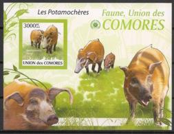 Comores - 2009 - Bloc BF N°Yv. 207 - Potamochères - Non Dentelé / Imperf. -Neuf Luxe ** / MNH / Postfrisch - Cote YT 21€ - Comoros