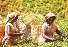 [MD3088] CPM - SRI LANKA CYLON - TEA PLUCKERS THE WORLD'S BEST TEA - Non Viaggiata - Sri Lanka (Ceylon)