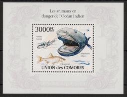 Comores - 2009 - Bloc BF N°Yv. 249 - Poissons - Neuf Luxe ** / MNH / Postfrisch - Cote YT 21€ - Komoren (1975-...)