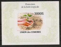 Comores - 2009 - Bloc BF N°Yv. 251 - Forêt Tropicale - Non Dentelé - Neuf Luxe ** / MNH / Postfrisch - Cote YT 21€ - Alberi