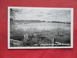 - Oregon > Orchard In Bloom Near Salem Ref 3295 - Salem