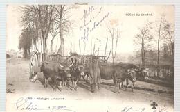 Haute Vienne Scène Du Centre Attelages Limousins De 1902 - France