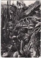 E1495 MONACO - JARDIN EXOTIQUE - LEMAIREOCEREUS MARGINATUS / AGAVE ATTENUATA / ECHINOCACTUS DIVERS - Exotic Garden