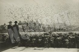 1957 VERY RARE QUEEN ELIZABETH II VISIT - PARQUE EDUARDO VII - LISBON - PORTUGAL. ORIGINAL REAL PHOTO - Lieux