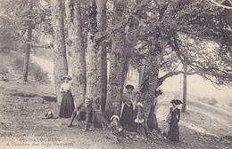 CPA 07 @ LA LOUVESC - A L'ombre Des 7 Fayards (Arbres Remarquables Serrés) En 1911 - La Louvesc