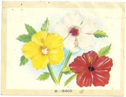 CARTINA  - IBISCO - B. Plantes Fleuries & Fleurs