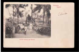 CEYLON  Colombo Bullock Hackery And Ricksha Ca 1905 OLD POSTCARD - Sri Lanka (Ceylon)