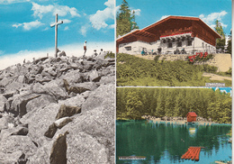 Bayer Wald Ak140581 - Allemagne