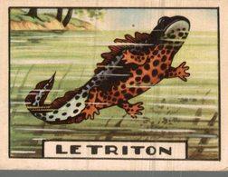 CHROMO  LE TRITON - Trade Cards