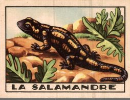 CHROMO   LA SALAMANDRE - Trade Cards