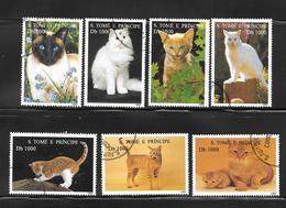 Sao Tomé E Principe - 1995 - Chat - Chats Domestiques