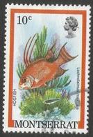 Montserrat. 1981 Fish. 10c Used. SG 556 - Montserrat