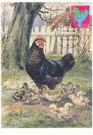 D36806 CARTE MAXIMUM CARD RR FD 2011 NETHERLANDS - ROOSTER COQ SILHOUETTE CP ORIGINAL - Gallinacées & Faisans
