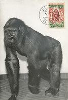 D36847 CARTE MAXIMUM CARD 1965 GABON - GORILLA CP ORIGINAL - Gorilles