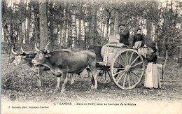 40 LANDES - Dans La Forêt , Mise En Barrique De La Résine (attelage - Culture) - France