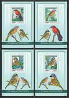 Guinea. 2019 Bushshrikes. (0102b)  OFFICIAL ISSUE - Oiseaux