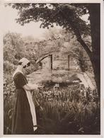 In Gardens Of The Days Of Good Queen Bess  Botánica Botany Botanique Botanik  Fonds Victor FORBIN (1864-1947) - Photographs