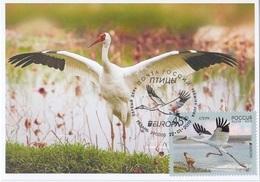 2653 Mih 2436 Russia 01 2019 Cartes Maximum Cards 8 Europa Fauna National Birds Siberian Crane Grus Leucogeranus - Cigognes & échassiers