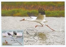 2653 Mih 2436 Russia 01 2019 Cartes Maximum Cards 7 Europa Fauna National Birds Siberian Crane Grus Leucogeranus - Cigognes & échassiers