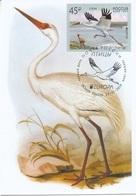 2653 Mih 2436 Russia 01 2019 Cartes Maximum Cards 6 Europa Fauna National Birds Siberian Crane Grus Leucogeranus - Cigognes & échassiers