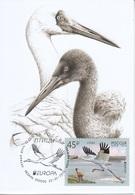 2653 Mih 2436 Russia 01 2019 Cartes Maximum Cards 5 Europa Fauna National Birds Siberian Crane Grus Leucogeranus - Cigognes & échassiers