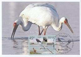 2653 Mih 2436 Russia 01 2019 Cartes Maximum Cards 3 Europa Fauna National Birds Siberian Crane Grus Leucogeranus - Cigognes & échassiers