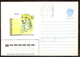 USSR / UdSSR●1990 Fauna Gepard With Overprint 0.75 Post Office SPB●Cover 90180 - Félins