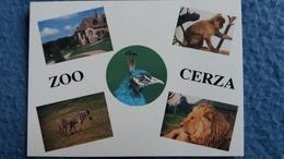 CPM ZOO CERZA HERMIVAL LES VAUX LISIEUX 14 MANOIR XVII MACAQUE PAON ZEBRE LION - Lions