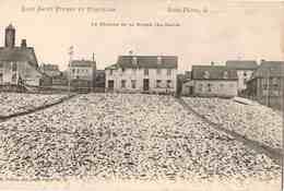 St Pierre Et Miquelon - Séchage De La Morue - La Grave - CPA Non écrite - Saint-Pierre-et-Miquelon