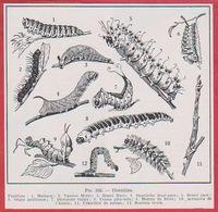 Chenille, Divers Types De Chenilles. Larousse Médical De 1974. - Vieux Papiers