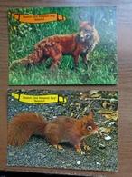 2 Kaarten - Museum Oud Kempisch Dorp Te Booischot Te Nederland (Vos En Eekhoorn) --> Unwritten - Animals