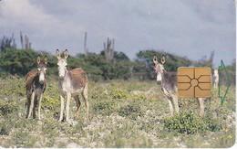 TARJETA DE BONAIRE DE UNOS BURROS (DONKEY-BURRO-ASNO) - Antilles (Netherlands)