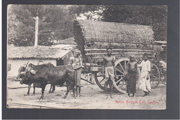 CEYLON Native Bullock Cart 1908 OLD POSTCARD - Sri Lanka (Ceylon)