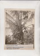 ASIA PHILIPINAS PHILIPPINES COCONUT PALM TREE   Fonds Victor FORBIN (1864-1947) - Lugares
