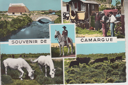 RT33.014   SOUVENIR DE CAMARGUE. CHEVAUX . TAUREAUX. ROULOTTE .N° 69-84 EDIT S.E.P.T. NICE - Other Municipalities