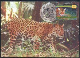 ONU  United Nations New York 1998 Carte Maximum  Maximum Card Jaguar. - Félins
