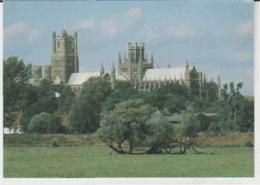 Postcard - Churches - Ely Cathedral - Unused  Very Good - Postcards