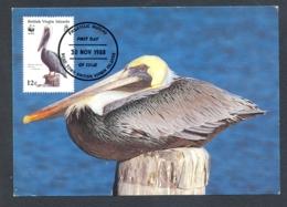 78593- BROWN PELICAN, BIRDS, MAXIMUM CARD, OBLIT FDC, 1988, BRITISH VIRGIN ISLANDS - Pélicans