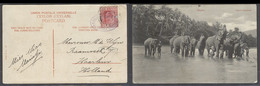 BC - Ceylon. 1908 (28 Sept). Colombo - Netherlands, Harlem. Fkd Elephants Card With Comercial Cachet Forsyth Cº. Fine. - Unclassified