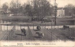 """ANTWERPEN-ANVERS """"DE ZOO-JARDIN ZOOLOGIQUE-LES MOUFLONS -WILDE SCHAPEN """"EDIT.HERMANS ,ANVERS - Antwerpen"""