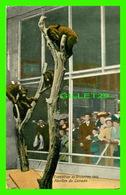 EXPOSITIONS DE BRUXELLES, 1910 - PAVILLON DU CANADA - ÉDITEURS VALENTINE & SONS LTD - - Expositions