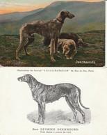 2 Très Belles Cartes Fantaisies Avec Des  Lévriers  Deerhounds - Honden